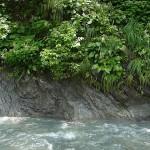 渓流の山野草