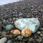 宮﨑海岸の成果