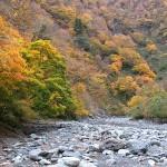 青海川上流の紅葉