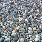 宮﨑海岸の小石