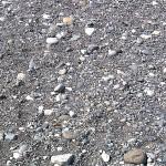コチドリの巣と卵 須沢海岸