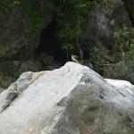 キセキレイ 小滝川