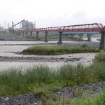 姫川下流の濁流