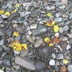 秋の気配 青海川
