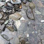 水中のヒスイ 青海川