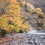青海川の紅葉