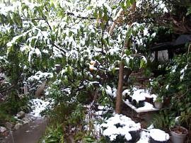 雪の日のえさ場
