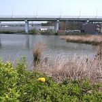 平野池 名古屋市野鳥生息状況調査 氷上姉子神社