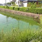 アオコが発生した平野池