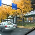 大須骨董市 2014.11.28