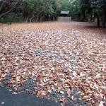 落ち葉 氷上の森