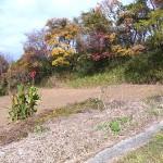 近くの畑の紅葉