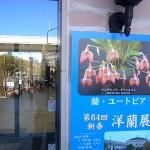 新春洋蘭展 フラリエ 2015