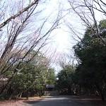 本宮の桜 氷上の森