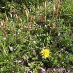 野草の花 近くの畑