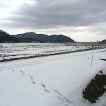 姫川 大野