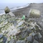 須沢海岸の成果 上質翡翠