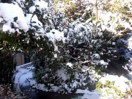 雪景色 給餌場