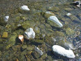 石に生えたコケ 小滝川