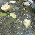 石に生えた川藻