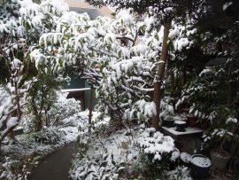 雪景色 庭の木々