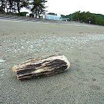 流木 宮崎海岸