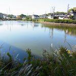名古屋市野鳥生息調査 1   2019.11.6