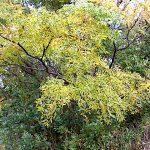 名古屋市野鳥生息調査 3 2019.11.24