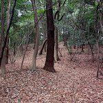 名古屋市野鳥生息調査 8 2020.1.16