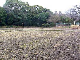 名古屋市野鳥生息調査 9 2020.1.27
