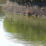 名古屋市野鳥生息調査 10  2020.2.4