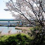 名古屋市野鳥生息調査 16 2020.4.6