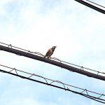 名古屋市野鳥生息調査 19 2020.5.12