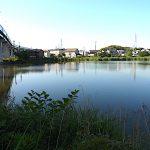 名古屋市野鳥生息調査 21 2020.5.29