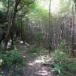 名古屋市野鳥生息調査 22 2020.5.29
