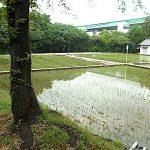 名古屋市野鳥生息調査 24 2020.6.12
