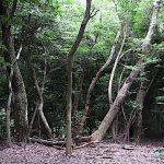 名古屋市野鳥生息調査 26 2020.7.5