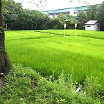 名古屋市野鳥生息調査 27 2020.7.28