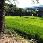 名古屋市野鳥生息調査 28 2020.8.23