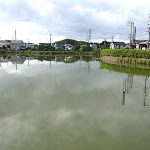 名古屋市野鳥生息調査 30 2020.9.11