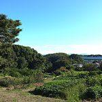 名古屋市野鳥生息調査 32 2020.9.27