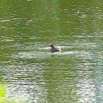 名古屋市野鳥生息調査 35 2020.10.20