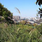 名古屋市野鳥生息調査 37 2020.10.29